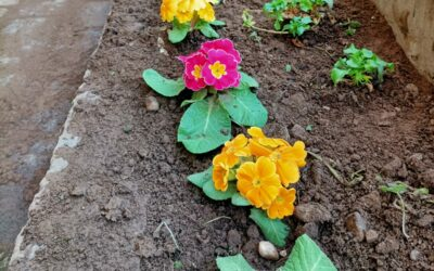 Abbiamo seminato, e ora raccogliamo!